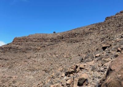 Ansicht auf einzelnen Baum auf Berggipfel