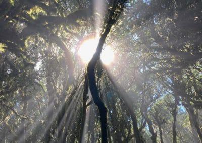 Sonne strahlt in Baumkronen